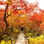 秋です!紅葉ドライブのシーズン到来!