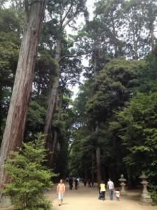 境内の杉並木